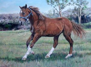Yarraman Brood Mare